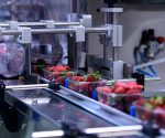Strawberries on conveyor belt on packing line